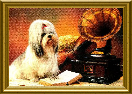 "Picture ""The Master's Voice"" with a Shih Tzu"
